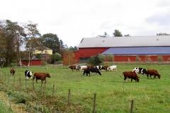 Bröderna Gotting - Köttkulla gård